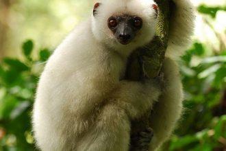 Hayvanlar Hakkında Yanlış ve Az Bilinen 12 Bilgi!